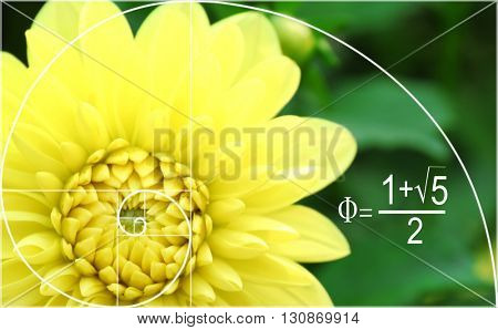 Illustration of golden ratio in nature. Fibonacci pattern