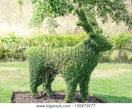 Green deer frame topiary in a spring garden