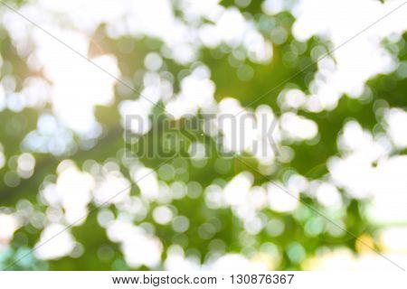 Bokeh, blur, glow, light green leaves and beautiful.