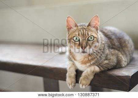cat sit on the bench with copyspace