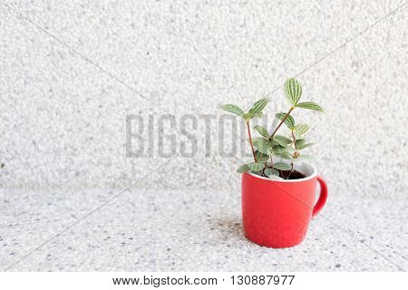 succulent plant pot in the house