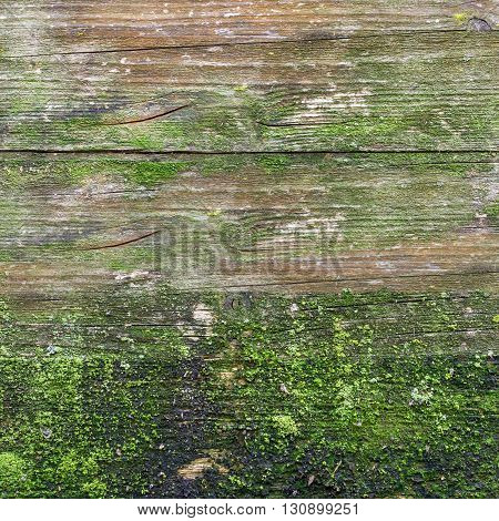 Details of wood texture with weathered look old and green.