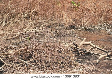 Dead Forest, After Fire