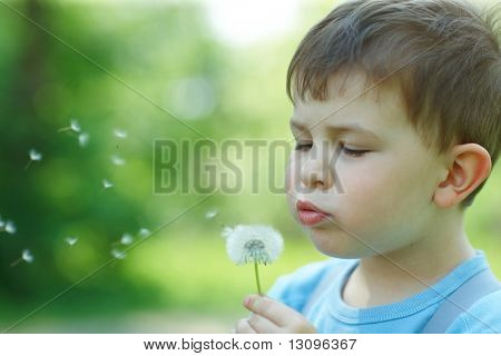 Four years old child blowing Dandelion seed outdoor in spring garden.