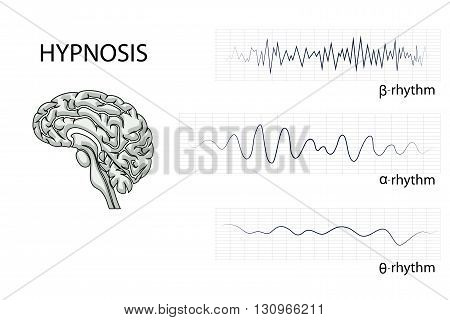illustration of the brain alpha beta and theta rhythm.