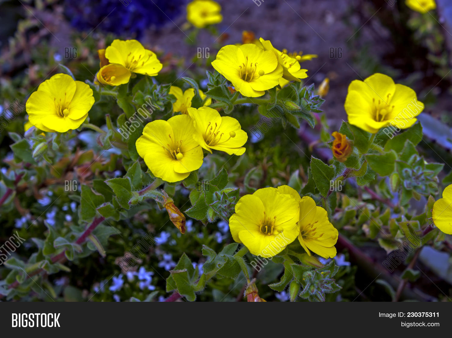 Little Yellow Flowers Image Photo Free Trial Bigstock