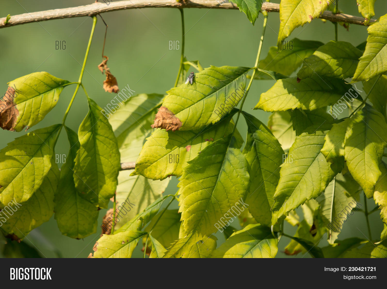 Close Green Leaf Image Photo Free Trial Bigstock