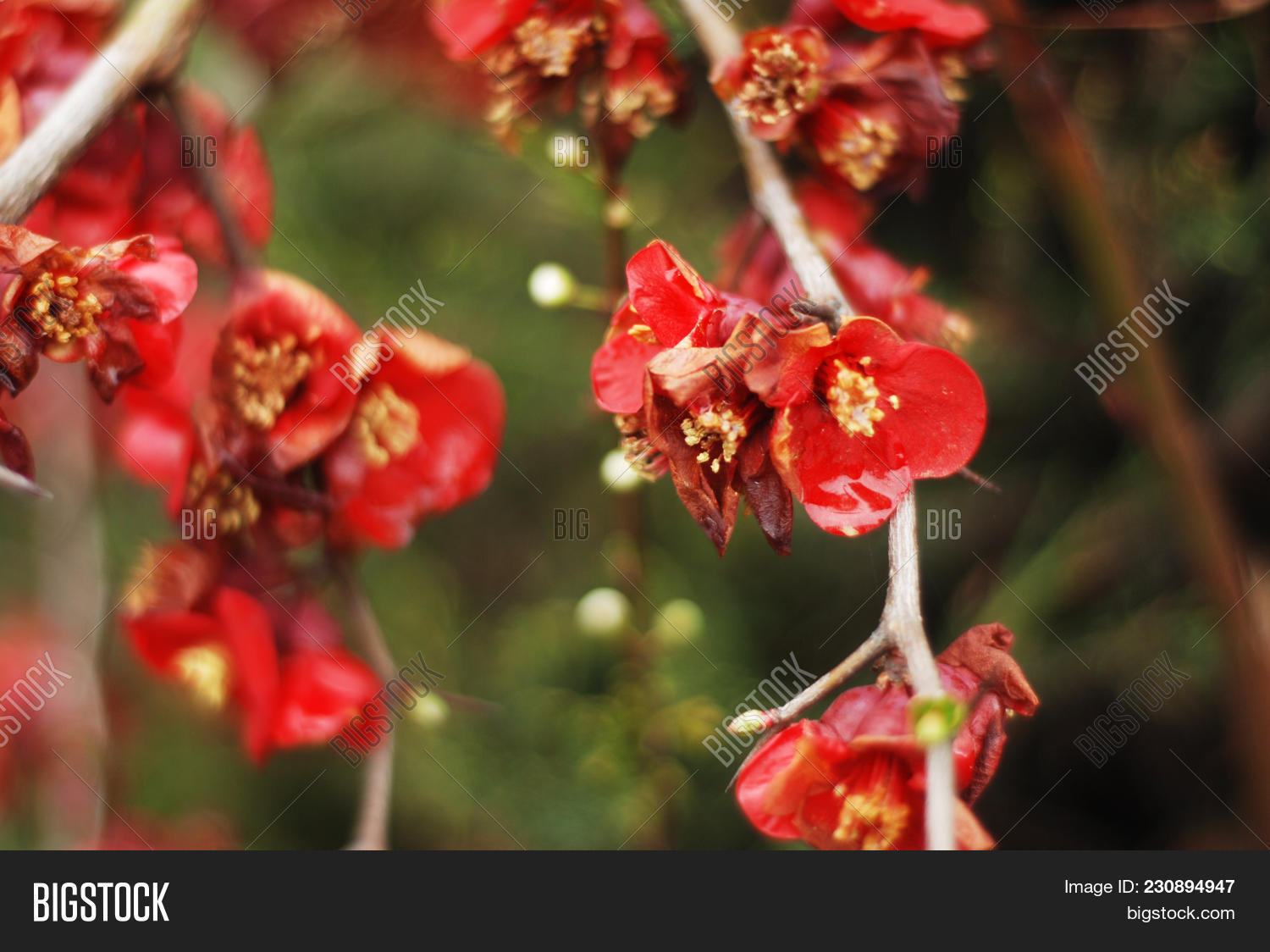 Red Colored Flowers Image & Photo (Free Trial) | Bigstock