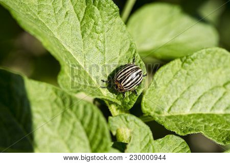 Gardening, Horticulture, Insect. Parasites In Wildlife And Agriculture, Entomology. Pests Destroy Cr