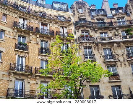 Paris.typical Architectural Details Of City Facades With Growing Green Tree