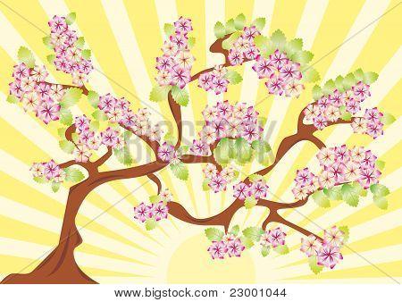 Spring card with sakura.