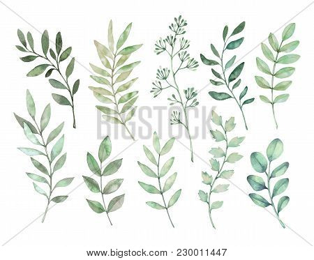 Hand Drawn Watercolor Illustrations. Botanical Clipart. Set Of Green Leaves, Herbs And Branches. Flo