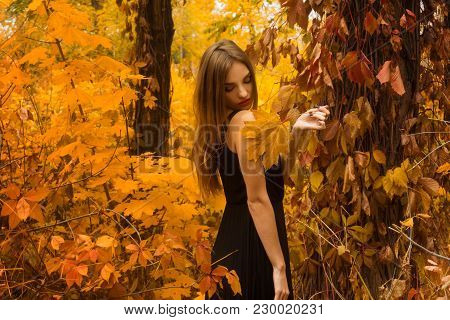Pretty Young Girl In Black Dress With Make Up Posing In Golden Autumn Forest Outdoors