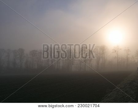 Row Of Trees At Sunrise On A Hill On A Misty Morning