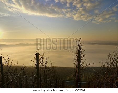 Sunrise Over A River Valley That Lies In The Fog. With Grape Vines In The Foreground