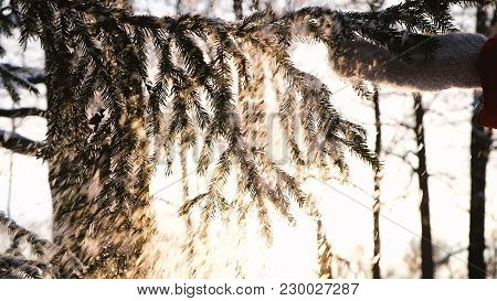 Female Hand In A Mitten Shakes Snow From A Spruce Branch, A Hand Beats Along A Fluffy Branch, Slow M