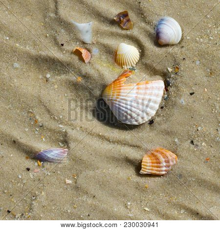 Brocken Seashells And Wet Sand Beach At Hot Sun Summer Day. View From Above.