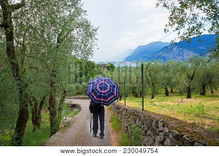 Man Walking Through Mediterranean Landscape With Olive Grove On A Rainy Day, Italy