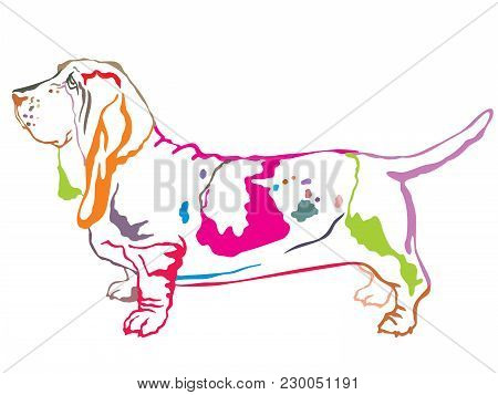 Colorful Contour Decorative Portrait Of Standing In Profile Dog Basset Hound, Vector Isolated Illust