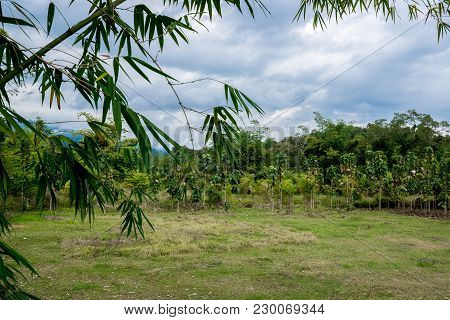 Bamboo Branch With The Field Of Grass And Plantation In The Countryside By Cloudy Weather, Traveling