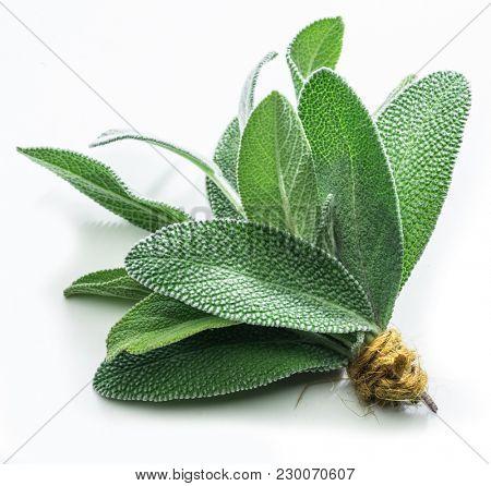 Fresh velvet leaves of garden sage on the white background.