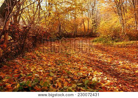 Landscape Of Bright Sunny Autumn Forest With Orange Foliage And Trail