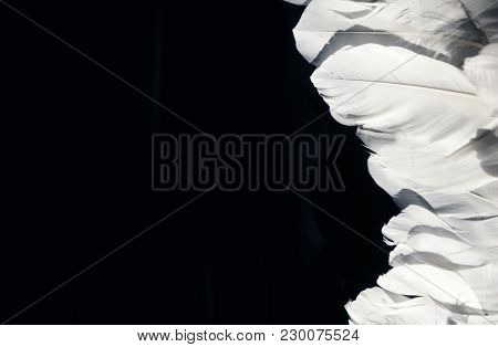 White feather. White angel wing on a black background
