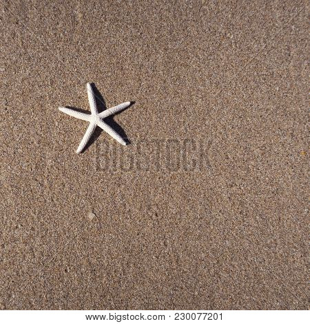 A Starfish On The Brown Beach Sand. Top View.