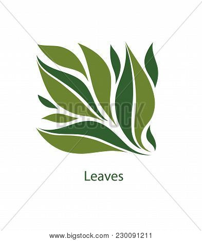 Green Leaves Of Trees And Plants. Elements For Eco, Organic And Bio Logos. Leaves Icon Vector Isolat