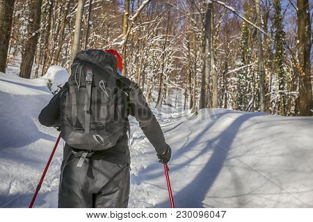 Close Up Of Hiker Walking With Trekking Poles In The Forest On The Hill Covered With Fresh Deep Snow