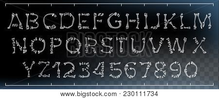 Bone Font Vector. Letters Anatomy. Abc Alphabet. Skeleton Style. Hell Scary Alphabet. Isolated Trans