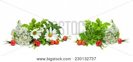 Herbs And Berries Of Wild Rose Isolated On White Background. Horizontal Photo.