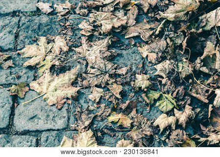 Fallen And Dried Up Autumn Leaves Lie On A Stone Pavement, The Concept Of Depression Of Decay And Wi