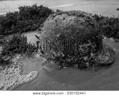 Hardhat With Barnacles One It.  Seaweed On The Beach When The Tide Goes Out. Black And White Photo