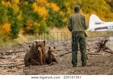 Park Ranger In Brooks Falls Camp Trying To Scare Mama-bear With Her Cubs Away From The Beach Of Nakn
