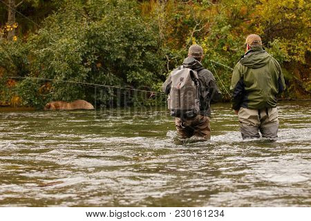 People And Bears Fishing Together In Brooks River In Katmai National Park In Alaska, Fishermen Break