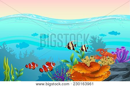 Marine Habitats And The Beauty Of Coral Reefs. There Are Anemones And Fish That Are Funny. Algae And