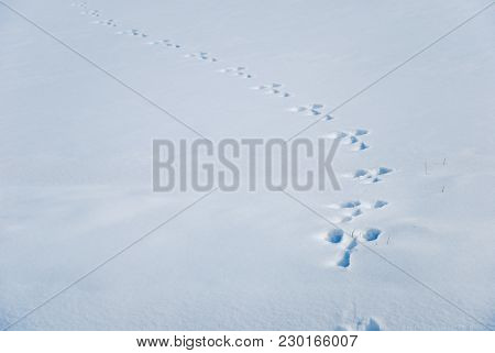 Wildlife Imprints In A Clean Snowy Landscape