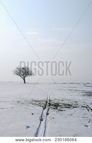 Single Bare Tree By Winter Season With Ski Tracks In Melting Snow