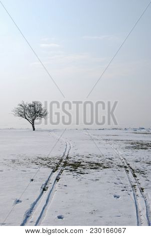 Melting Ski Tracks In A Misty Landscape With A Lone Bare Tree