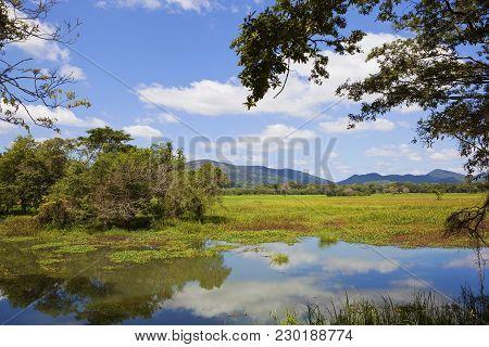 Sri Lankan Landscape And Lake At Wasgamuwa National Park With Trees Lotus Woodland And Mountains Und