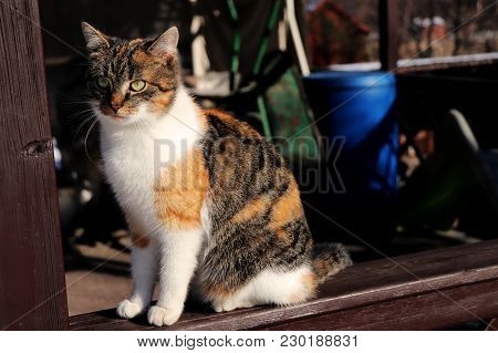 Domestic Colored Cat Sitting On Windowsill And Looking On The Garden.