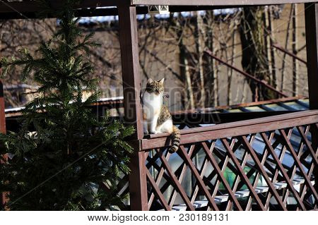 A Cat Sitting On Windowsill Looking On The Garden And Waitting For Food