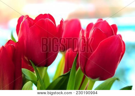 Spring Flowers. Tulips On A Blue Sky Background. A Bouquet Of Fresh Tulips. Pink And Red Tulips. The