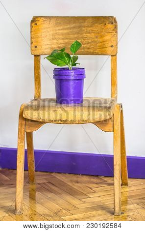 Modern Vintage Interior Space Design With Old Retro Wooden School Chair, Purple Pot And Green House
