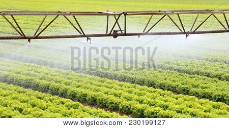 Automatic Irrigation System Of A Cultivated Field Of Lettuce