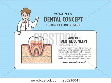 Layout Cross-section Tooth  With Text Box And Doctor Cartoon Style For Info Or Book Illustration Vec