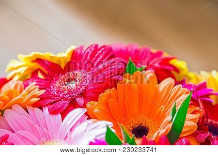 Closeup Of Vibrant Colorful Daisy Gerbera Flowers, Background