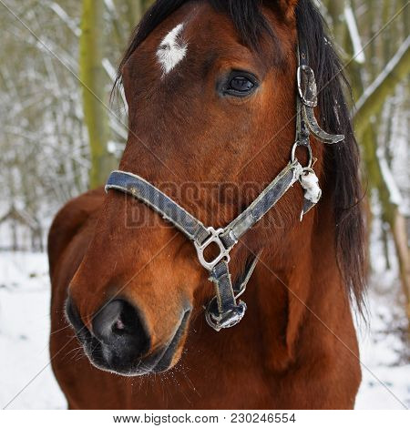 Image Of Horse In Harness On Winter Background