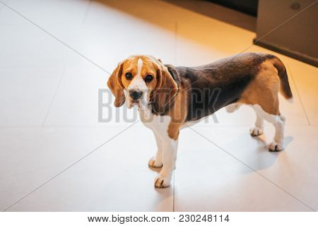 Image Of Sad Dog Stands On The Floor